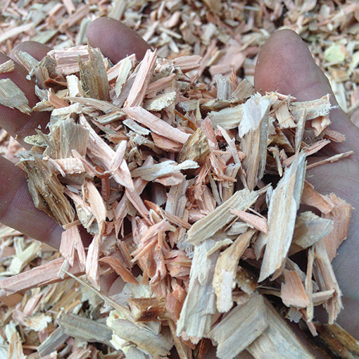 Wee Chip Cowichan Handful of Pine Wood Chips