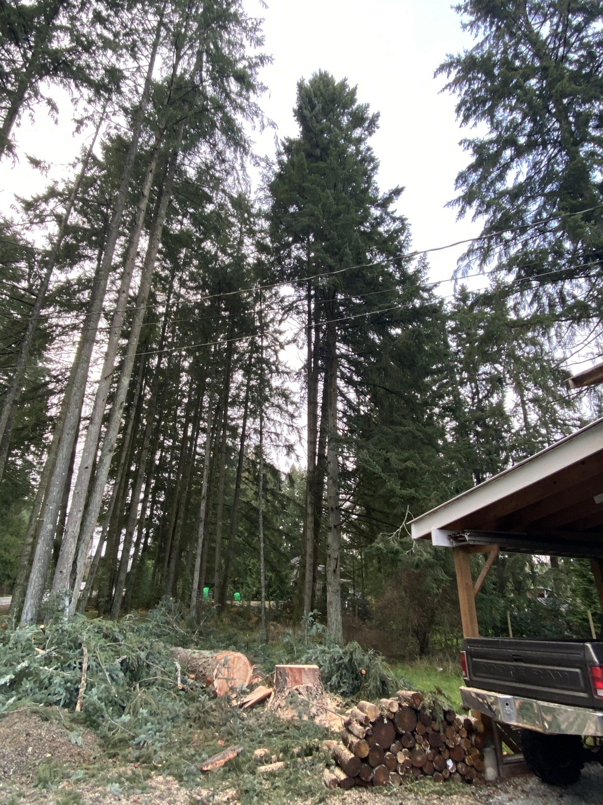 Trees In Between Power Lines