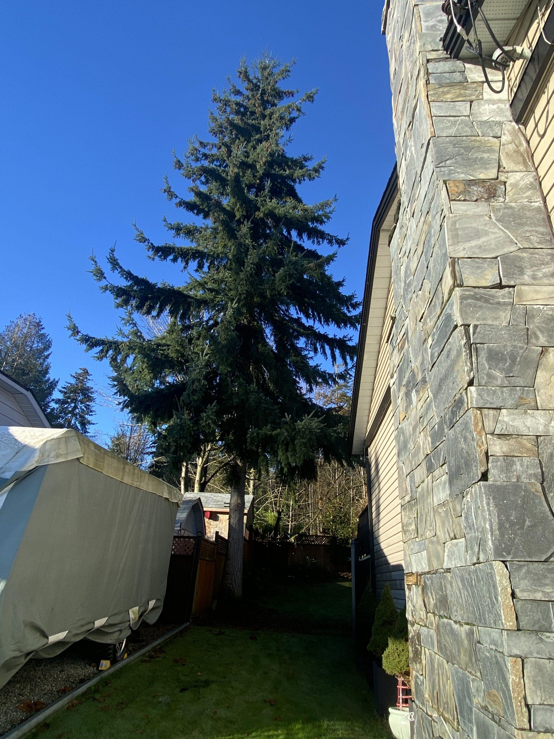 Fast Eddy's Tree Work Narrow Cut Area